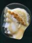 Hadrian. Empire and Conflict. Bild 2