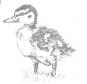 Haustiere skizzieren und zeichnen. Bild 2
