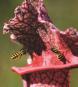Karnivoren. Die Welt der fleischfressenden Pflanzen. Bild 2