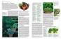 Kräuter. Die große Enzyklopädie. Anbau und Verwendung. Bild 2