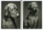 Kubrick The Dog. Geschenkausgabe. Bild 2