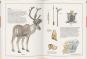 Mammut, Urmensch, Höhlenbär. Leben in der Steinzeit. Bild 2
