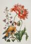 Maria Sibylla Merian. Künstlerin und Naturforscherin 1647-1717. Bild 2