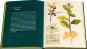 Mein Herbarium. Kräuterschätze und die Lust des Sammelns. Bild 2