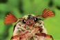 NaturGenies. Die verblüffenden Tricks der Pflanzen und Tiere. Bild 2