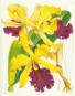 Orchideentafeln - Aus Curtis's Botanical Magazine Bild 2