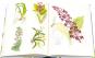 Orchideentafeln aus Curtis's Botanical Magazine. Bild 2
