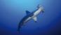 Planet Ocean - Das Meer und seine Bewohner 3 DVDs Bild 2
