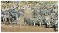 Serengeti wird ewig leben 8 DVDs Bild 2