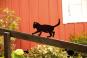 Silhouette »Balancierende Katze«. Bild 2