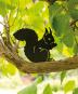 Silhouette »Essendes Eichhörnchen«. Bild 2