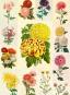 Sprechende Blumen. Ein ABC der Pflanzensprache. Bild 2