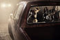 The Silence of Dogs in Cars. Tierportraits. Bild 2