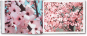 Thomas Demand. Blossom. Signiert. Bild 2