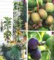 Topf-Garten - Das Grüner-Daumen-Konzept Bild 2
