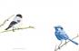 Vögel in der Kunst. Bild 2