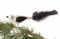 Vogel weiß/schwarz mit schwarzen Federn. Bild 2