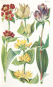 Alpenflora. Die verbreitetsten Alpenpflanzen von Bayern, Österreich und der Schweiz. Reprint der Ausgabe München 1937. Bild 3