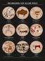 Das große Kunst-Sammelsurium. Von der Höhlenmalerei zur Pop Art. Bild 3