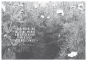 Das kleine Herbarium - Ein Buch zum Sammeln, Erinnern und Bewahren Bild 3