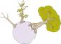 Der Kleine Prinz Buch und Affenbrotbaum Baobab im Set. Bild 3