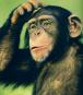 Die Enzyklopädie der Tiere Bild 3