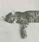 Doris Lessings Katzenbuch. Katzenportraits von Isolde Ohlbaum. Bild 3