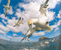 Earthflight. Der Zug der Vögel. Bild 3