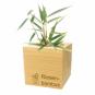 Holzwürfel mit Riesenbambus-Samen. Bild 3