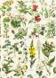 Geschenkpapier »Flora«. Bild 3