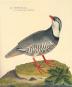Geschichte der Vögel. Histoire des Oiseaux. Bild 3