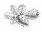 Heilschnäpse, Liköre und Tinkturen. Bild 3