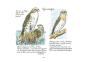 Karl Wenzel. Das Vogel-Album. Bild 3