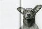 Kubrick The Dog. Geschenkausgabe. Bild 3
