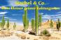 Mini-Gewächshaus »Kaktus & Stachel«. Bild 3