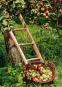 Obstgehölze schneiden. Schritt für Schritt zur reicher Ernte. Bild 3