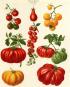 Pflanzen und Kultur. Eine illustrierte Weltgeschichte der Botanik. Bild 3