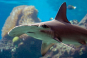 Planet Ocean - Das Meer und seine Bewohner 3 DVDs Bild 3