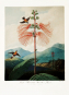 Robert John Thornton. The Temple of Flora. Bild 3