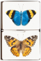 Schmetterlinge und ihre Flügel. Bild 3
