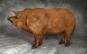 Schöne Schweine Porträts ausgezeichneter Rassen. Bild 3