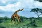 Serengeti wird ewig leben 8 DVDs Bild 3