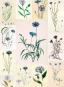 Sprechende Blumen. Ein ABC der Pflanzensprache. Bild 3