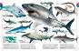 Tiere. Die Vielfalt der Tierwelt in 1500 Bildern. Bild 3