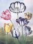 Tulip Anthology. Anthologie der Tulpe. Bild 3