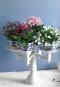 Vertikal pflanzen - Hängende Gärten, begrünte Wände und blühende Paletten Bild 3