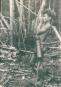 Wald Baum Mensch. Bild 3