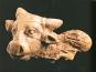 Afghanistan. Gerettete Schätze. Die Sammlung des Nationalmuseums in Kabul. Bild 4