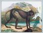 Aloys Zötl oder Die Animalisierung der Kunst. Bild 4