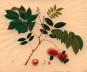 Chinesische Kunst und die Reeves Collection. Bilder der Natur. Bild 4